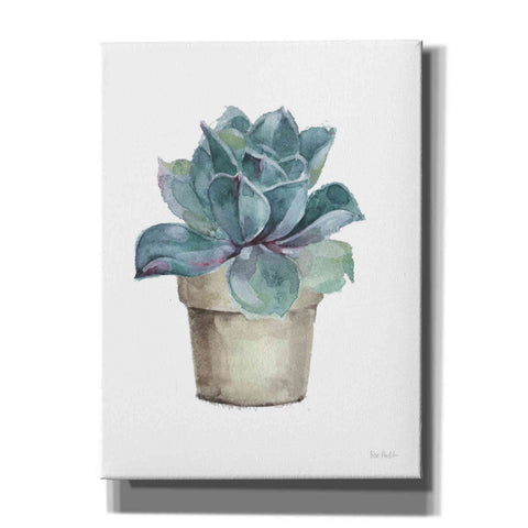 'Mixed Greens Succulent IV' by Lisa Audit, Canvas Wall Art