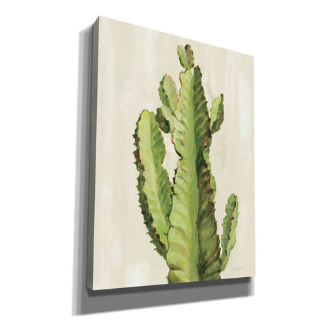 Image of 'Front Yard Cactus II' by Silvia Vassileva, Canvas Wall Art