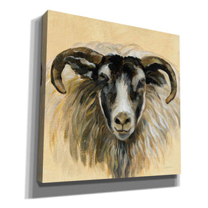 'Highland Animal Ram' by Silvia Vassileva, Canvas Wall Art