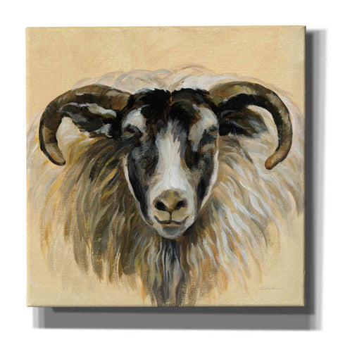 Image of 'Highland Animal Ram' by Silvia Vassileva, Canvas Wall Art