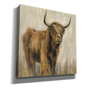 'Highland Mountain Cow' by Silvia Vassileva, Canvas Wall Art