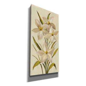 'Elegant White Florals II' by Silvia Vassileva, Canvas Wall Art