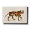 'Walking Tiger Light' by Silvia Vassileva, Canvas Wall Art