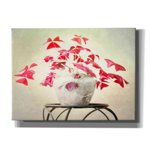 """Butterfly Plant"" by Hal Halli, Canvas Wall Art"