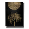 """Golden Willow 3"" by Hal Halli, Canvas Wall Art"