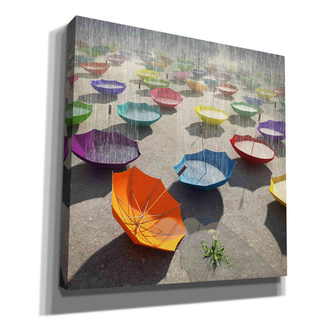 Image of 'Downpour' by Cynthia Decker, Canvas Wall Art