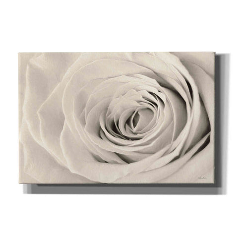 Image of 'Cream Rose' by Lori Deiter, Canvas Wall Art
