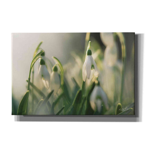 'Snowdrops' by Martin Podt, Canvas Wall Art