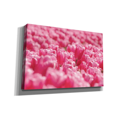 'Pink Field' by Martin Podt, Canvas Wall Art