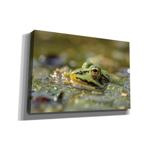 'Frog' by Martin Podt, Canvas Wall Art