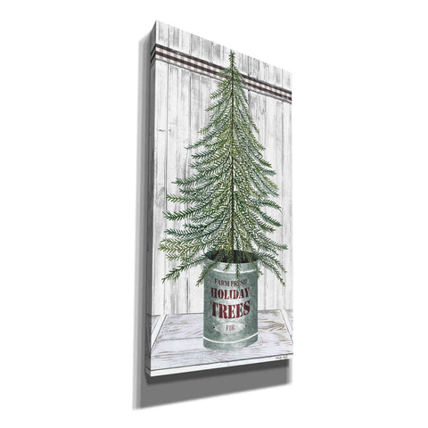Image of 'Galvanized Pot Fir' by Cindy Jacobs, Canvas Wall Art