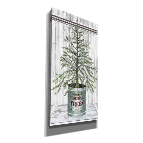 Image of 'Galvanized Pot Pine' by Cindy Jacobs, Canvas Wall Art
