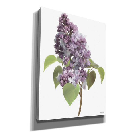 'Lilac Stem' by House Fenway, Canvas Wall Art