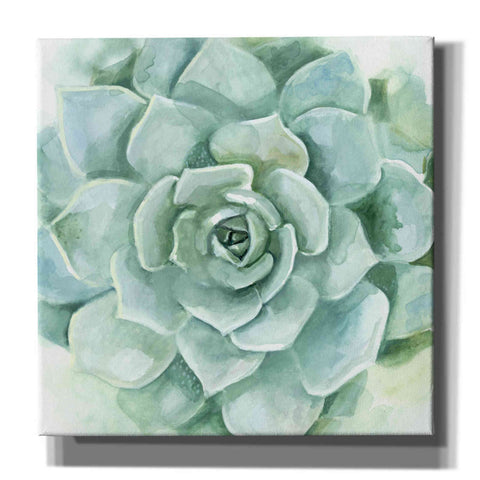 Image of 'Verdant Succulent I' by Victoria Borges, Canvas Wall Art