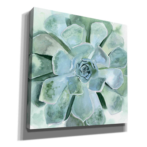 'Verdant Succulent III' by Victoria Borges, Canvas Wall Art