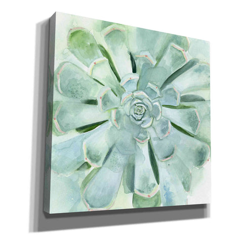 'Verdant Succulent IV' by Victoria Borges, Canvas Wall Art