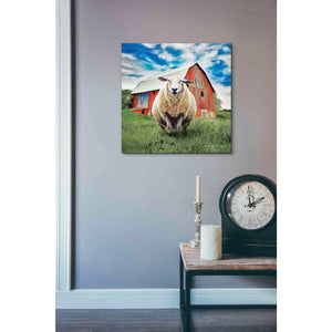 'Sunday Afternoon Sheep Pose' by Bluebird Barn, Canvas Wall Art,18 x 18