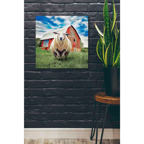 Image of 'Sunday Afternoon Sheep Pose' by Bluebird Barn, Canvas Wall Art,26 x 26