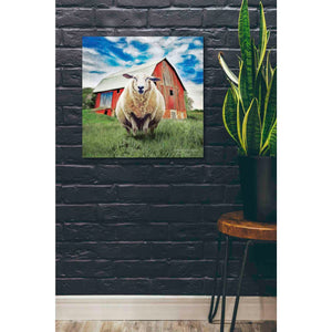 'Sunday Afternoon Sheep Pose' by Bluebird Barn, Canvas Wall Art,26 x 26