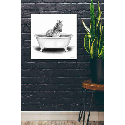 'Zebra in Tub' by Rachel Nieman, Giclee Canvas Wall Art