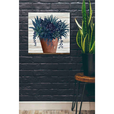 Image of 'Remarkable Succulents II' by Cindy Jacobs, Giclee Canvas Wall Art