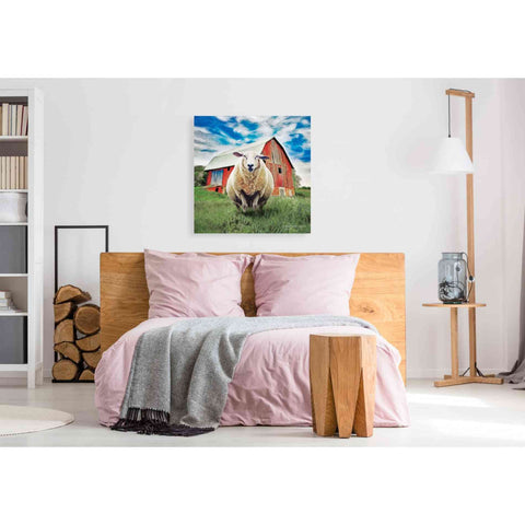 Image of 'Sunday Afternoon Sheep Pose' by Bluebird Barn, Canvas Wall Art,37 x 37