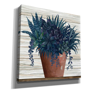 'Remarkable Succulents II' by Cindy Jacobs, Giclee Canvas Wall Art