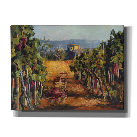 "Image of ""Rhone Valley Vineyard"" by Marilyn Hageman, Giclee Canvas Wall Art"