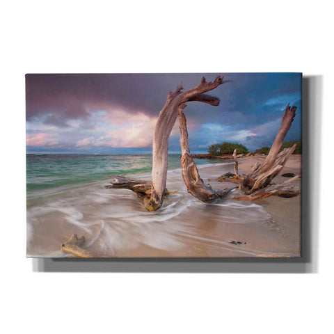 'Driftwood Sunset' by Katherine Gendreau, Giclee Canvas Wall Art