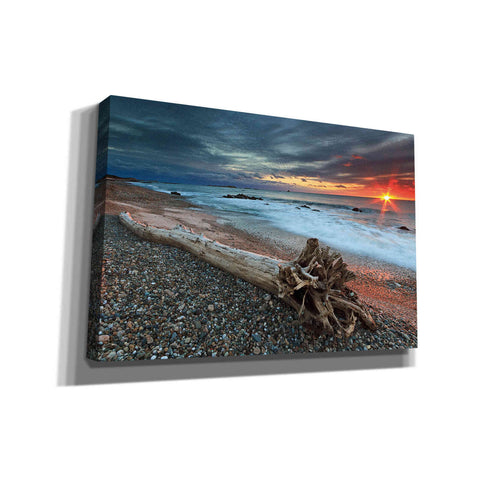 'Sakonnet Driftwood' by Katherine Gendreau, Giclee Canvas Wall Art
