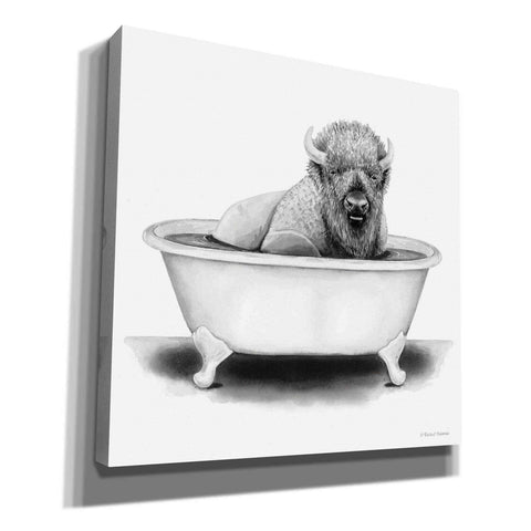 'Bison in Tub' by Rachel Nieman, Giclee Canvas Wall Art