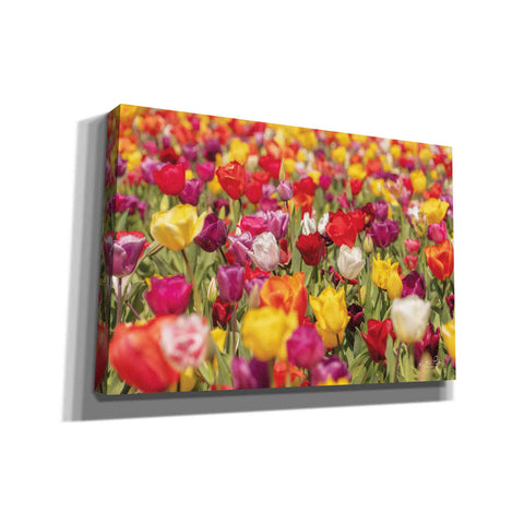'Colorful Bouquet' by Martin Podt, Canvas Wall Art,Size A Landscape