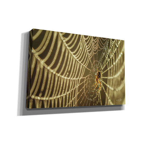 'The Spider and Her Jewels' by Martin Podt, Canvas Wall Art,Size A Landscape