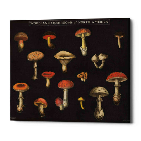 Image of 'Mushroom Chart I' by Wild Apple Portfolio, Giclee Canvas Wall Art