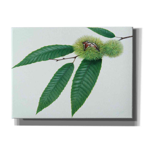 Image of 'Chestnut' by Zigen Tanabe, Giclee Canvas Wall Art