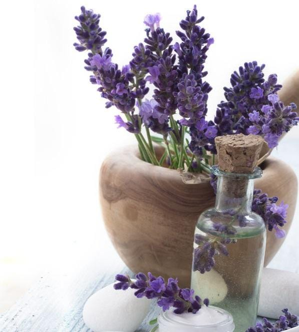10 Things You Need to Know About Lavender Essential Oil