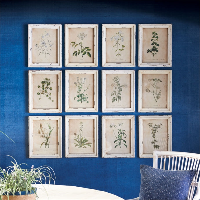 Palmetto Wildflower Botanical Prints - Shop House Market