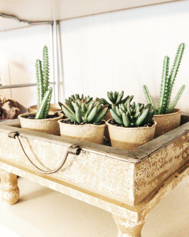 ARTIFICIAL MINI SUCCULENT - Shop House Market
