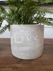 Inspirational Concrete Pot - Shop House Market