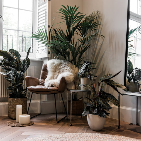 Plant Filled Home