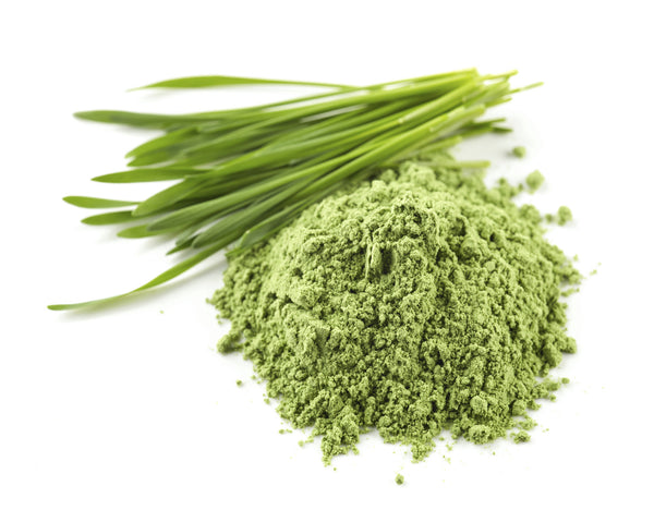 New Zealand Wheatgrass