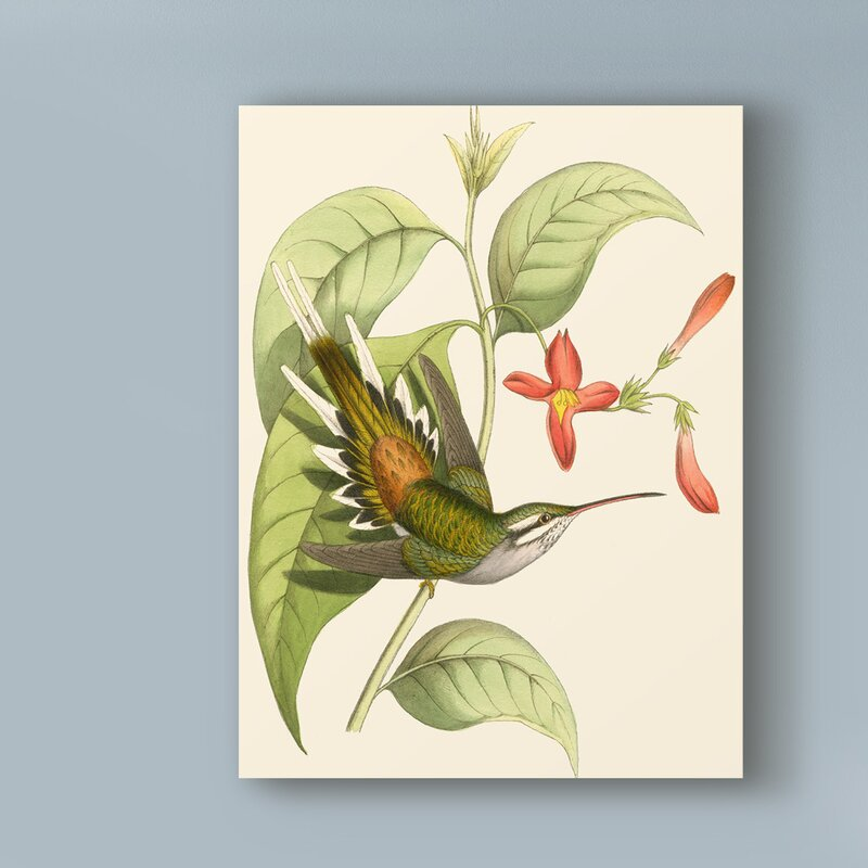 'Delicate Hummingbird I' Graphic Art Print on Wrapped Canvas