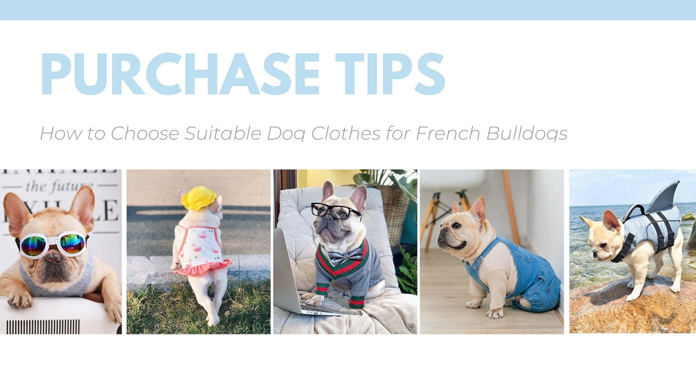 How To Select Dog Clothing and Buy Right Clothes for French Bulldogs ?