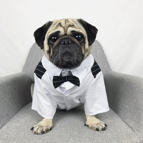 dog wedding outfits with necktie for boy dogs - Frenchiely