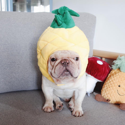 pineapple dog costume - Frenchiely
