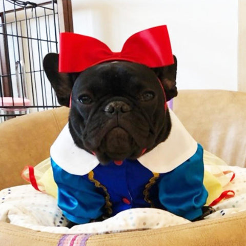 French Bulldog Halloween Dog Princess Snow White Costume - Frenchiely