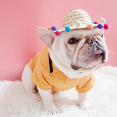 Summer Straw Hat for Frenchies - Frenchiely