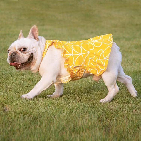 French Bulldog Summer Dress