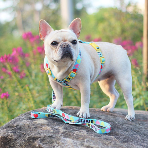 harness leash set for french bulldogs - Frenchiely