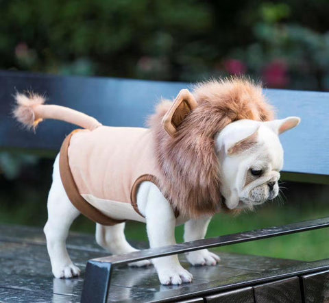 french bulldog lion costume - Frenchiely